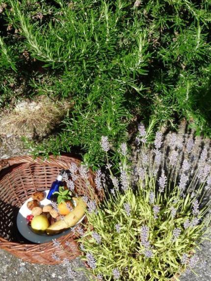 Alimentation Naturopathique
