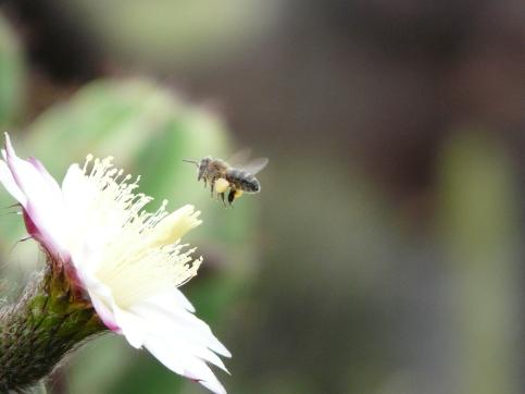 Pollen Apithérapie Flavie Dode Naturopathie Réflexologies