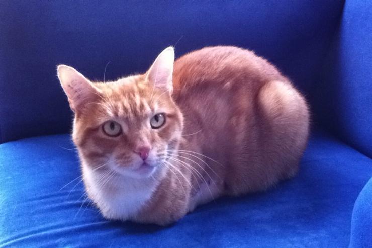Reiki animal chat soin énergétique