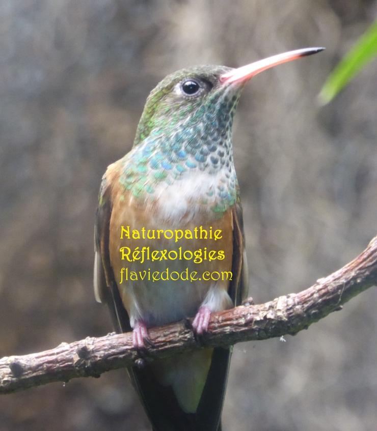 Naturopathie Réflexologies Colibri Flavie Dode