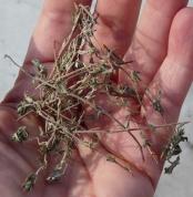 Flavie Dode Naturopathie Réflexologies Bien-être Alimentation Nutrition Diététique Thym Phytothérapie Plantes Aromatiques Plantes Médicinales cuisine