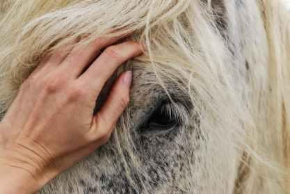 Cheval Reiki Animal Flavie Dode Naturopathie Réflexologies Bien-être