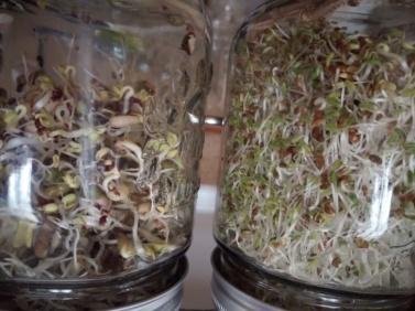 Flavie Dode Naturopathie Réflexologies Bien-être Alimentation Vitalité Nutrition Graines germées