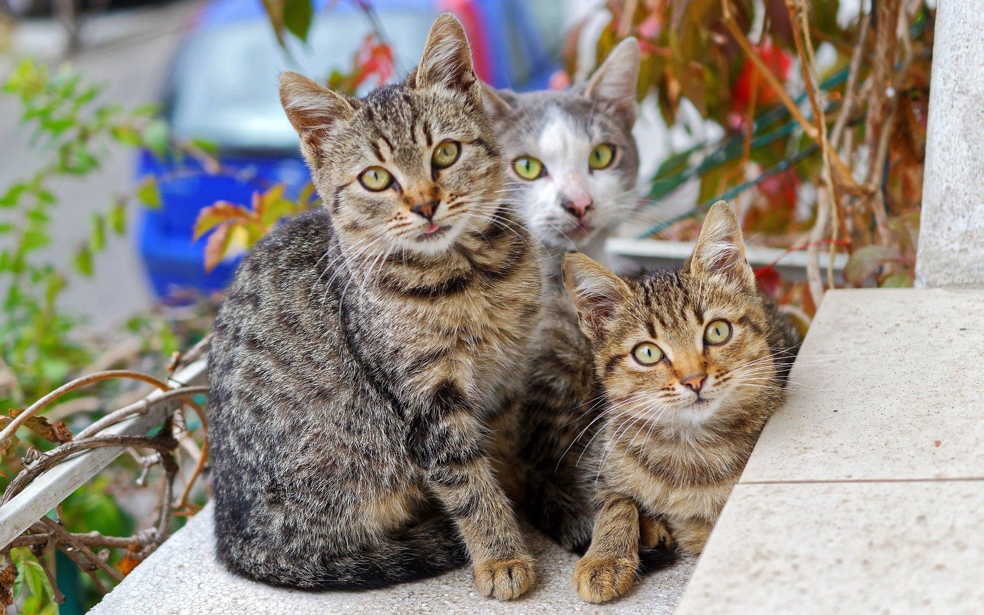 chats soin énergétique communication animale chats