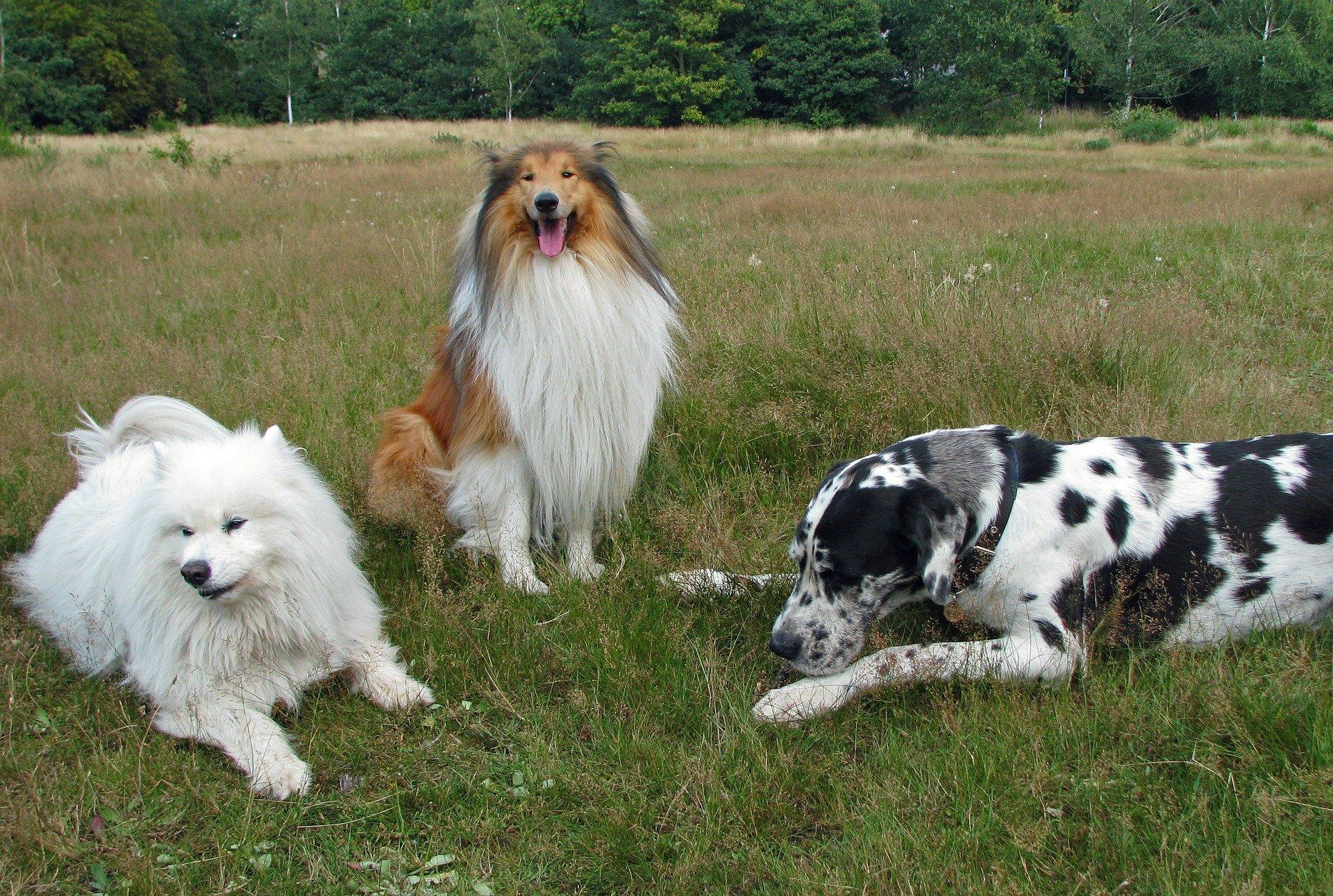 soin énergétique communication animale chiens