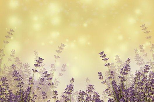 Voyage aromatique pause olfactive olfactothérapie lavande