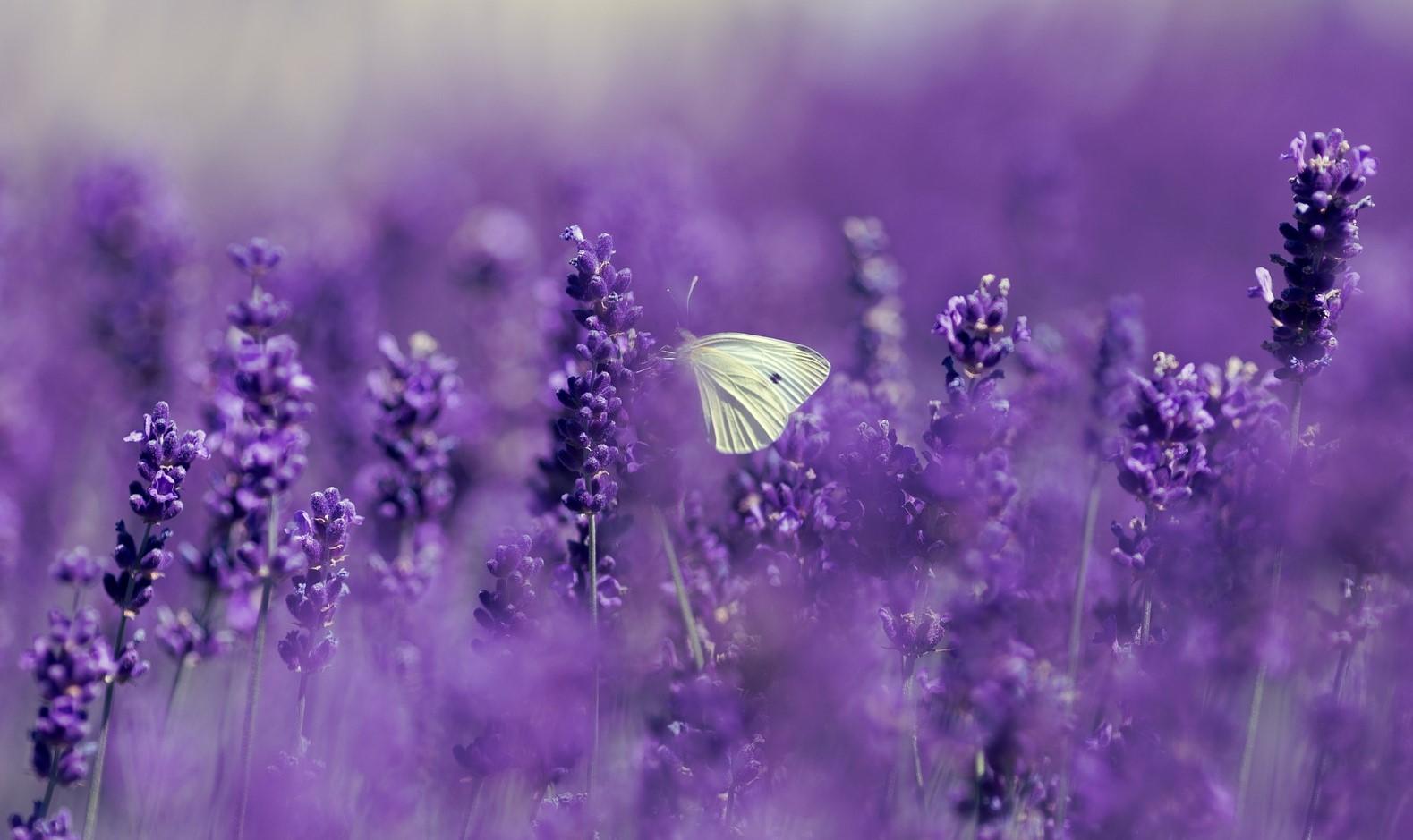 cocon Papillon olfactif soin pause olfactive