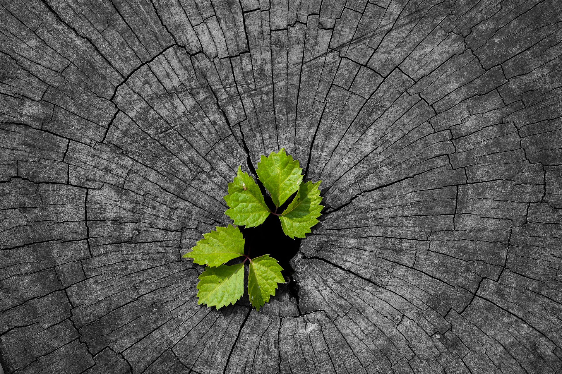 regen-arbre