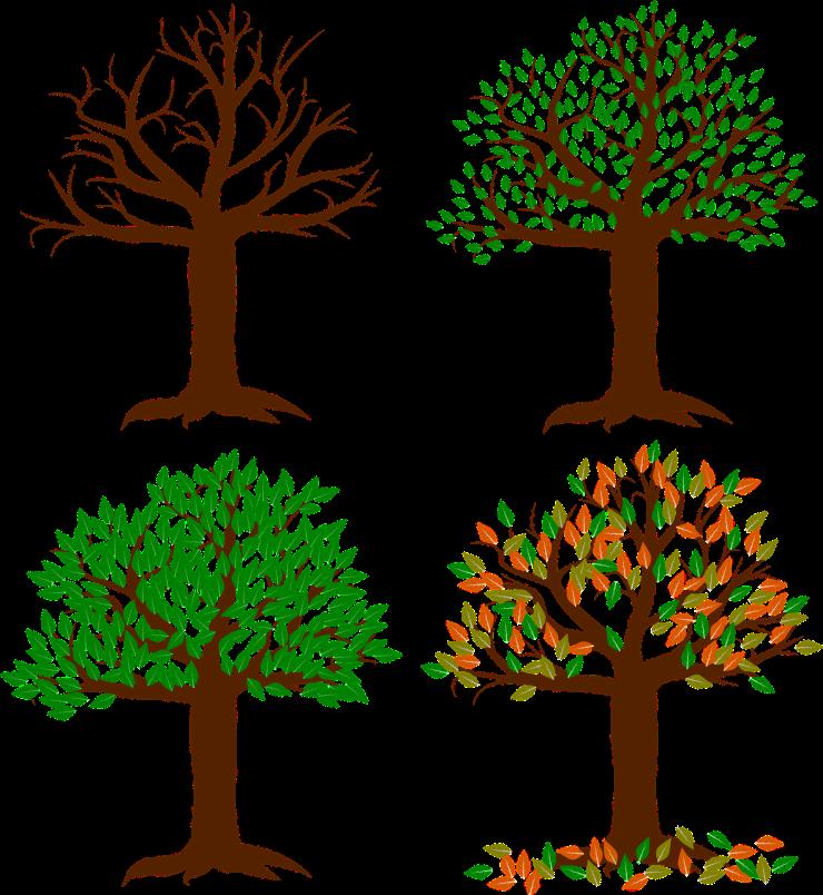 arbre pendant les 4 saisons hiver printemps été automne